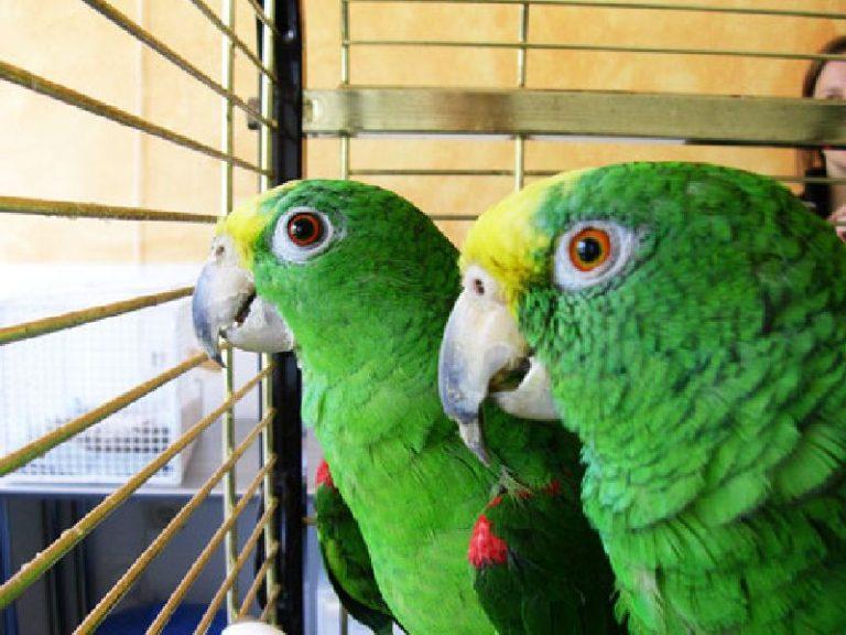Patienten Tierarztpraxis für Vögel Lotte