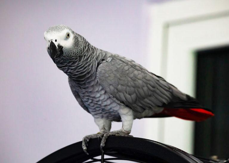 Vögel Tierarztpraxis für Vögel Lotte