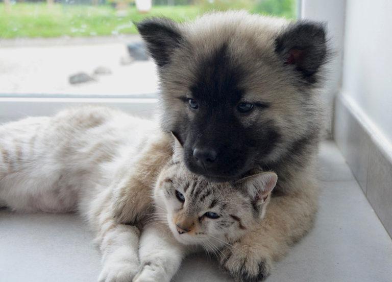 Hunde und Katzen Tierarztpraxis für Vögel Lotte